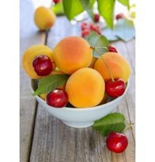 Odkôstkovač na ovocie ENCD / Odpeckovač třešní